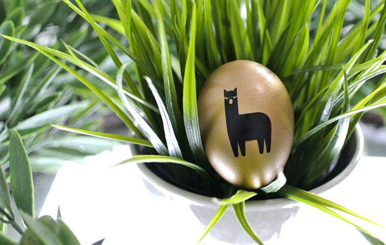 wisteria llama closeup